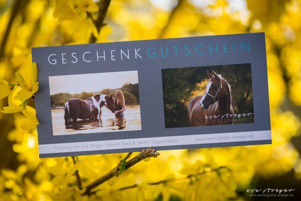 Tierfotografie Eva Stöger Pferdefotografie Hundefotografie Gutschein