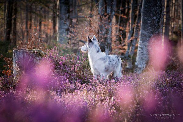 Tierfotografie Eva Stöger Hundefotografie