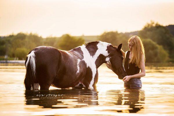 Tierfotografie Eva Stöger Pferdefotografie